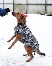 Лечебный пёс Марик ищет дом